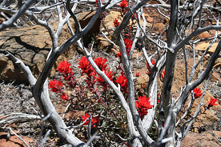Image of a plant surviving after a bushfire